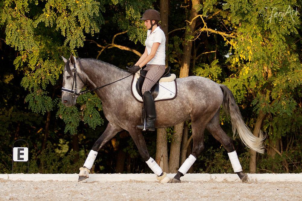 Pferdeshooting mit fenjArt Fotografie ein lusitano trabt unter seiner reiterin auf dem reitplatz