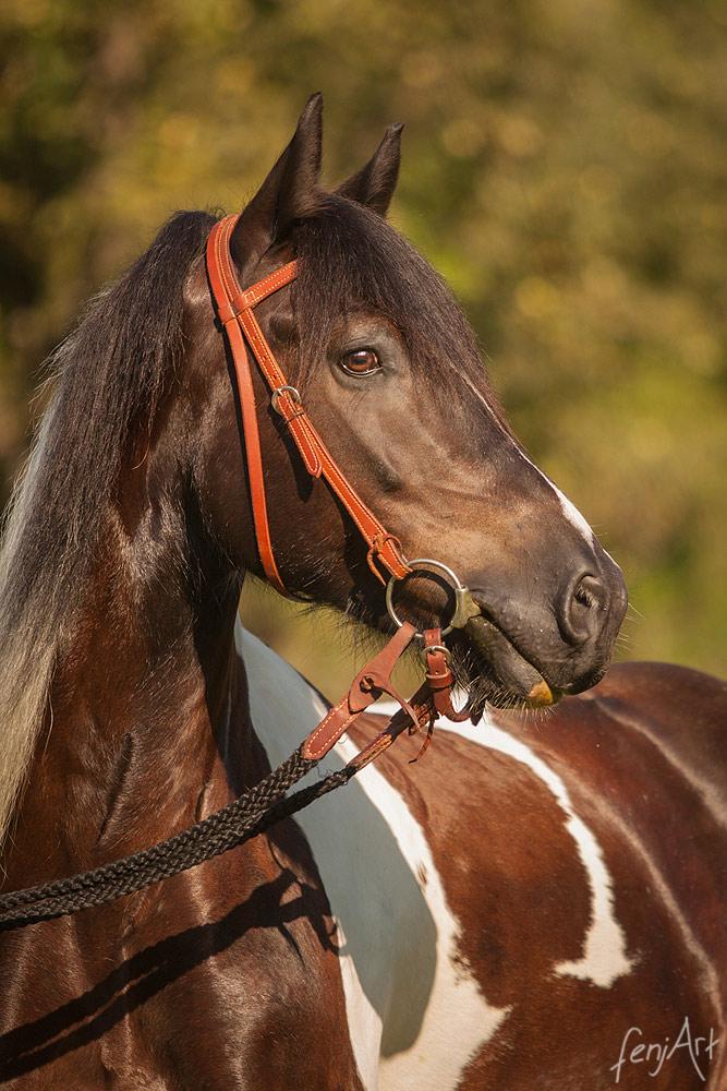Pferdeshooting mit fenjArt Fotografie portrait eines braun weiss gescheckten Tinkerpferds